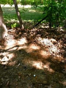 Yard Debris Removal Roswell Ga