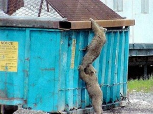 Hire a junk removal company instead of getting a dumpsters